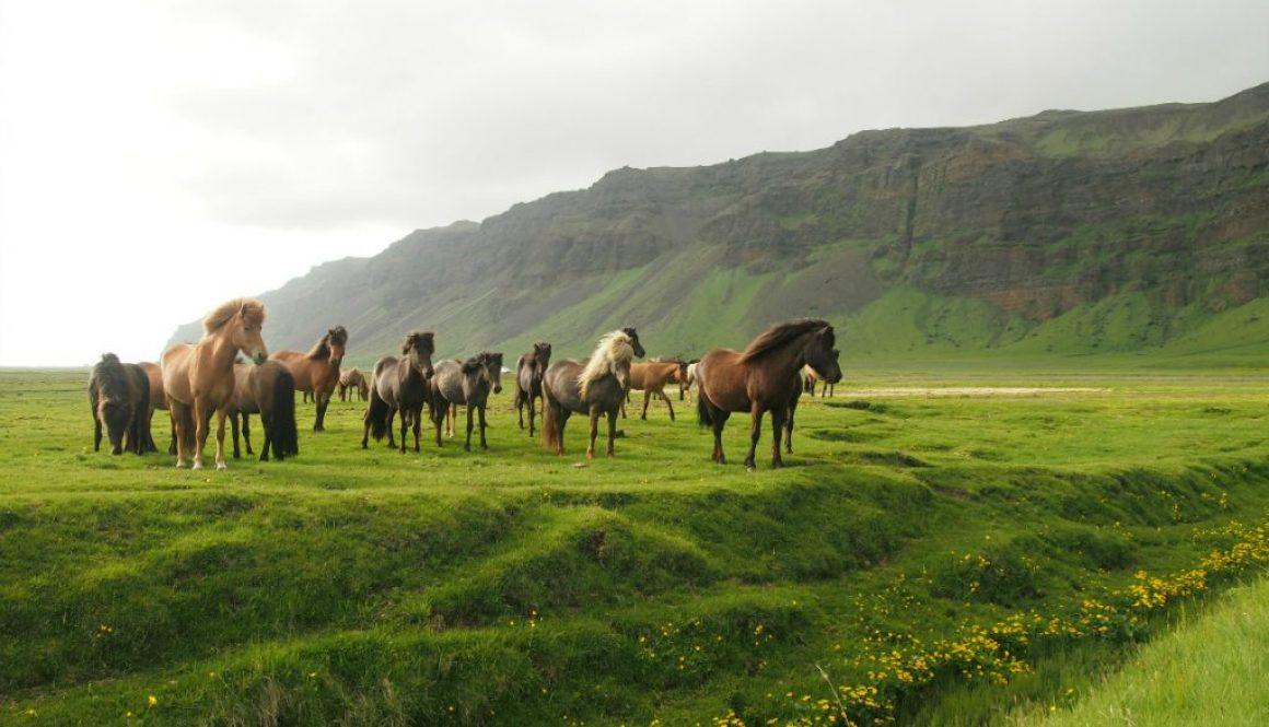 Island: Na juhu po Ring Road – vodopády, čierny piesok a Mordor