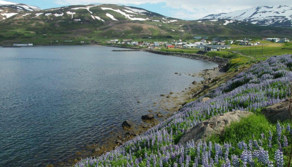 Island: Severné fjordy – nečakaná idylka na záver